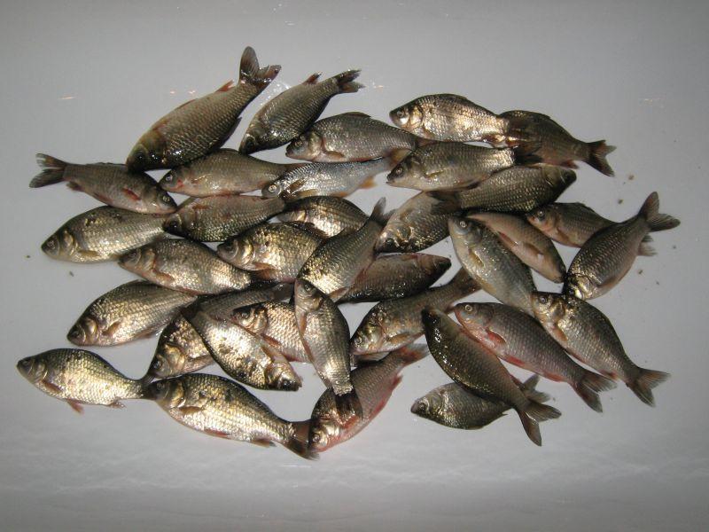 бурцевский ставок суждение что до  рыбалке